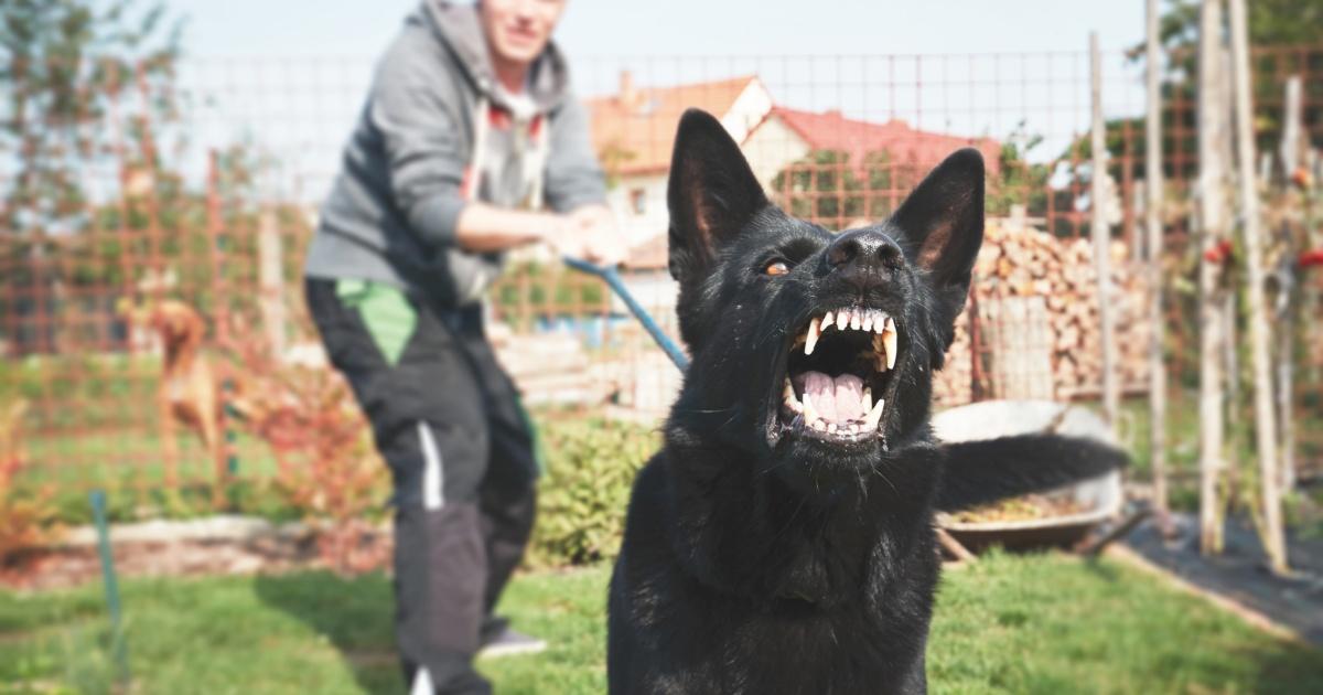 dangerous dog bite